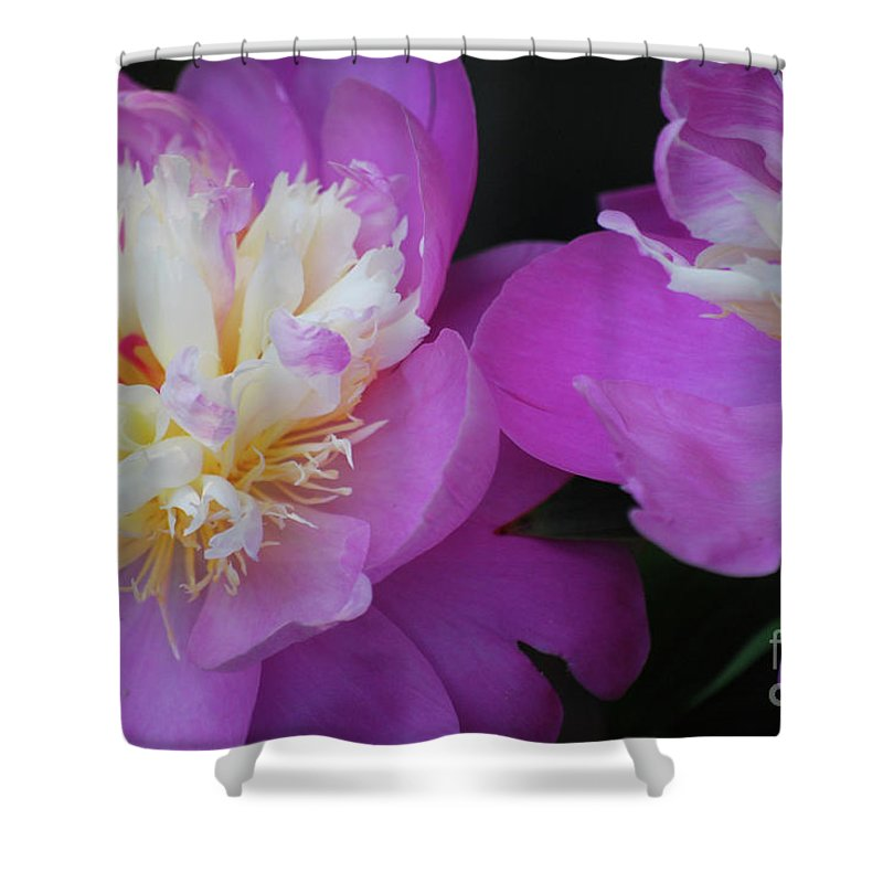 Peony Shower Curtain featuring the photograph Beauty Is What We Do by Lori Tambakis