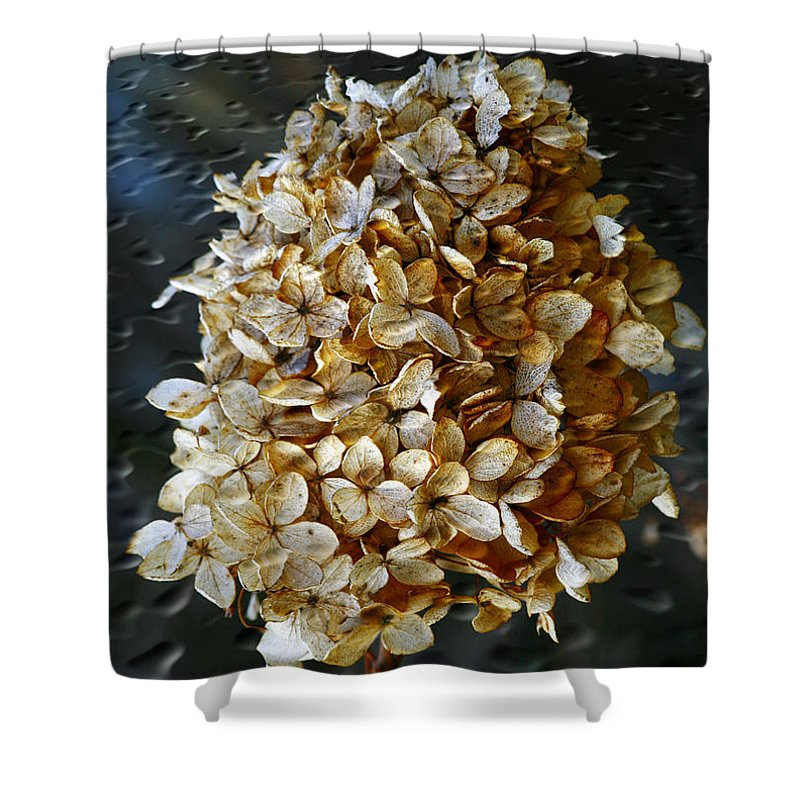 Flower Shower Curtain featuring the photograph Beauty Of Old by Deborah Benoit