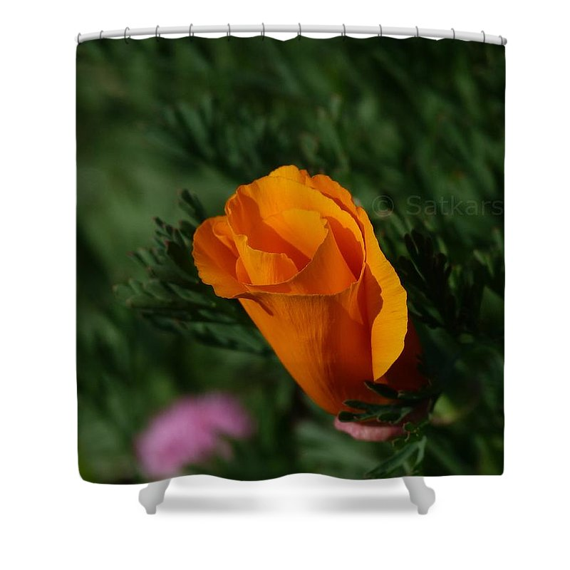 Flowers Shower Curtain featuring the photograph Beauty by Satish Kumar