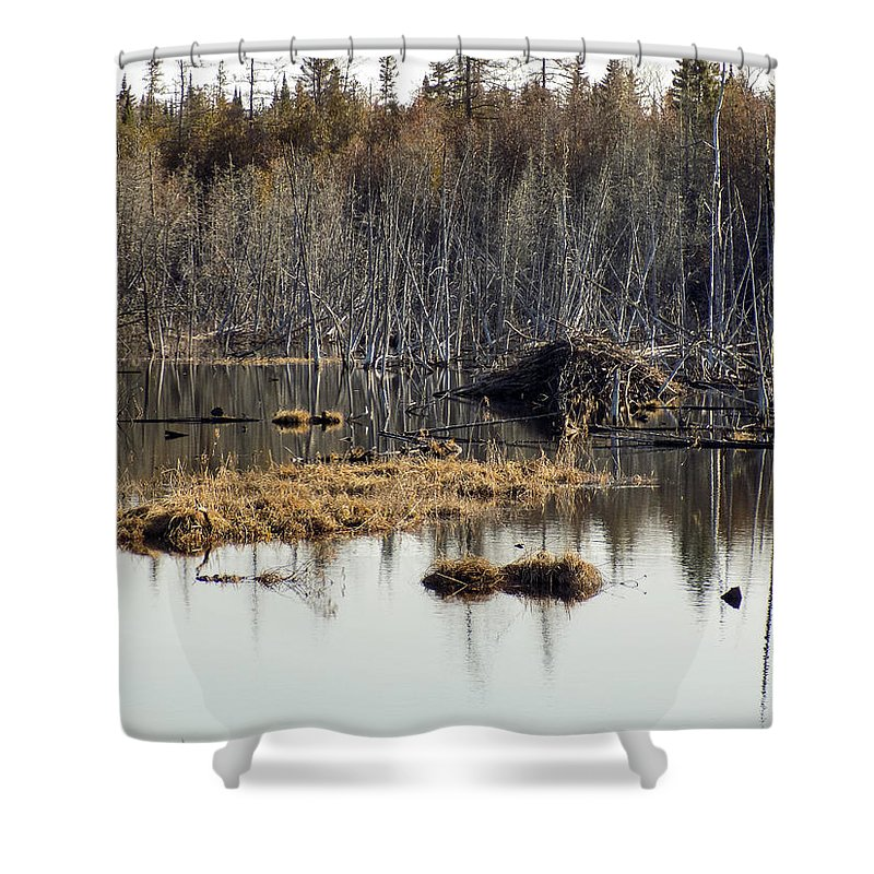Beaver Shower Curtain featuring the photograph Beaver Residence by William Tasker