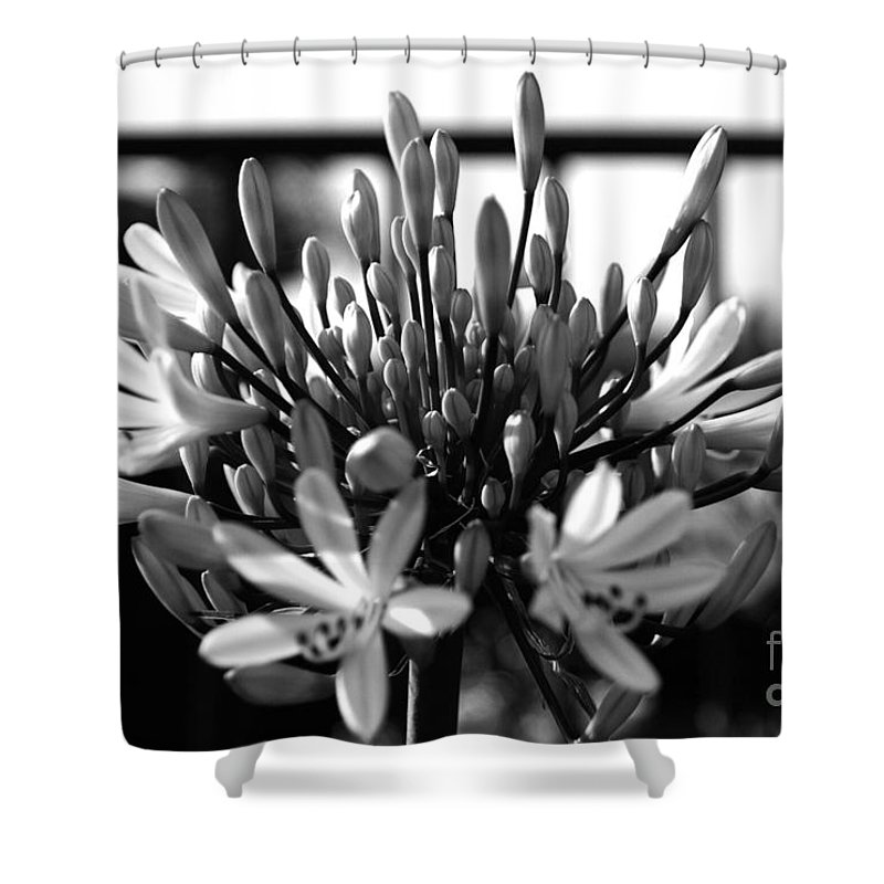 Floral Shower Curtain featuring the photograph Becoming Beautiful - Bw by Linda Shafer