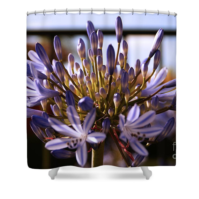 Floral Shower Curtain featuring the photograph Becoming Beautiful by Linda Shafer