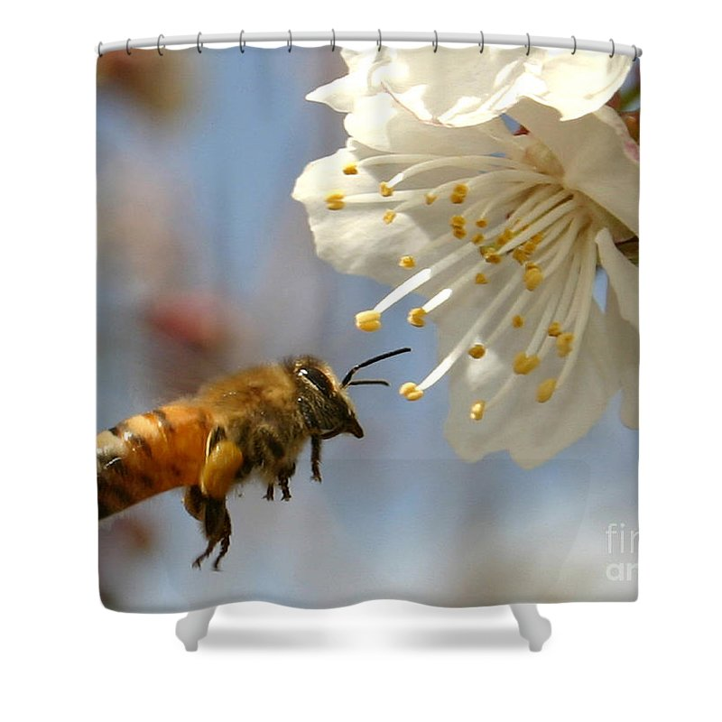 Honey Shower Curtain featuring the photograph Bee And A Blossom by Danny Yanai