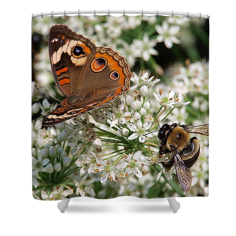 Ann Keisling Shower Curtain featuring the photograph Bee And Butterfly by Ann Keisling