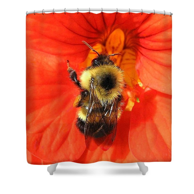 Bee Shower Curtain featuring the photograph Bee And Nasturtium by Will Borden