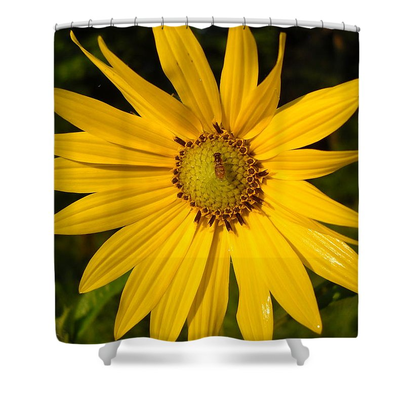 Floral Shower Curtain featuring the photograph Bee And Yellow Flower by Kent Lorentzen