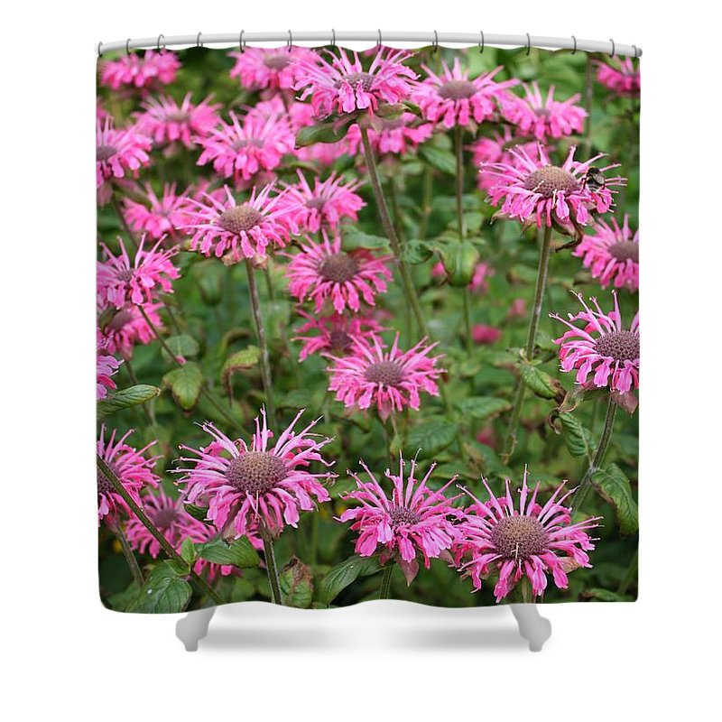 Bee Balm Shower Curtain featuring the photograph Bee Balm Beauties by Carol Groenen