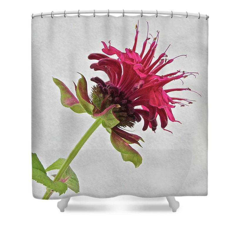 Bee Balm Shower Curtain featuring the photograph Bee Balm by Michael Peychich