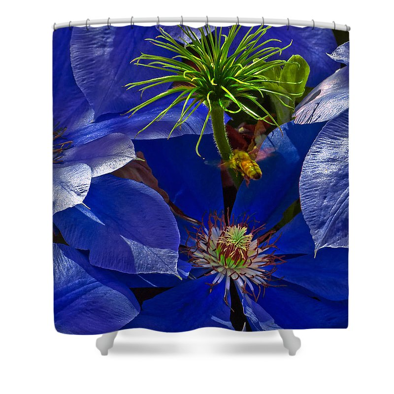 Clematis Shower Curtain featuring the photograph Bee Blues by Chris Lord