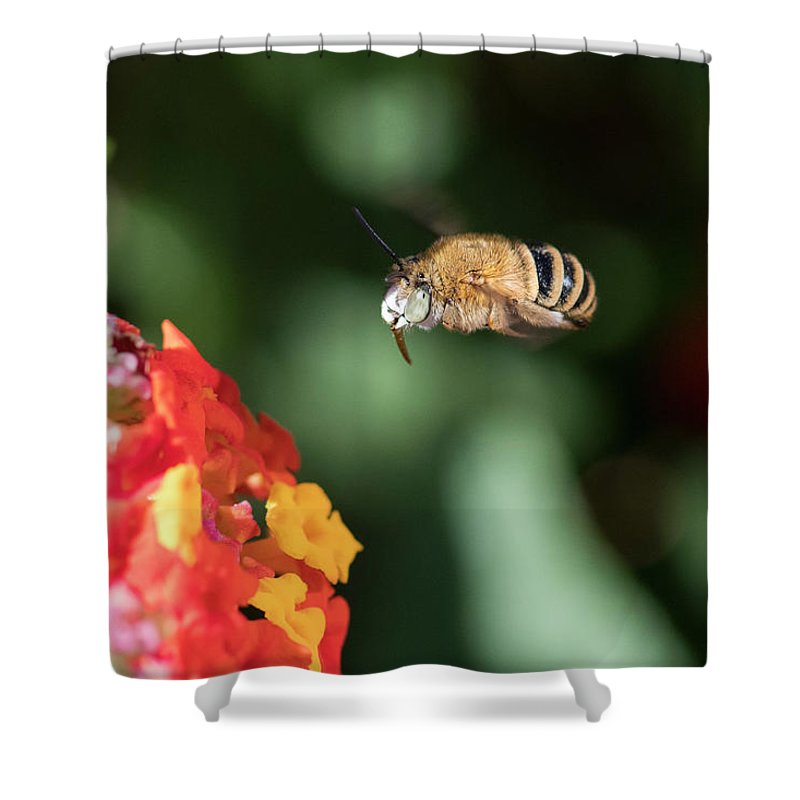 Bee Shower Curtain featuring the photograph Bee, Bumblebee, Flying To A Flower, In Marseille, France by Sylvie CUCCHI