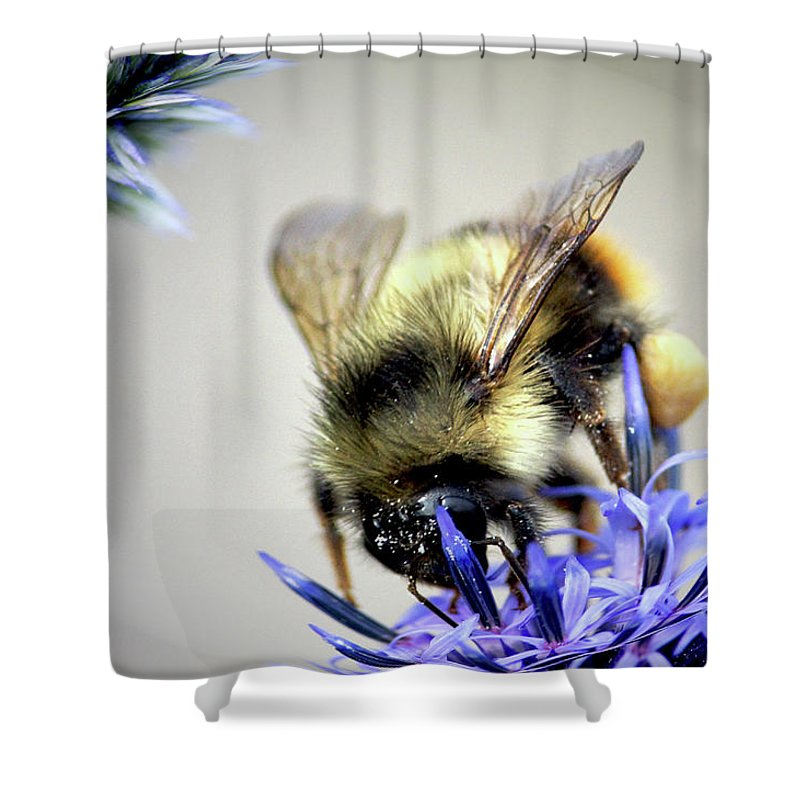 Sharon Talson Shower Curtain featuring the photograph Bee In A Bubble by Sharon Talson