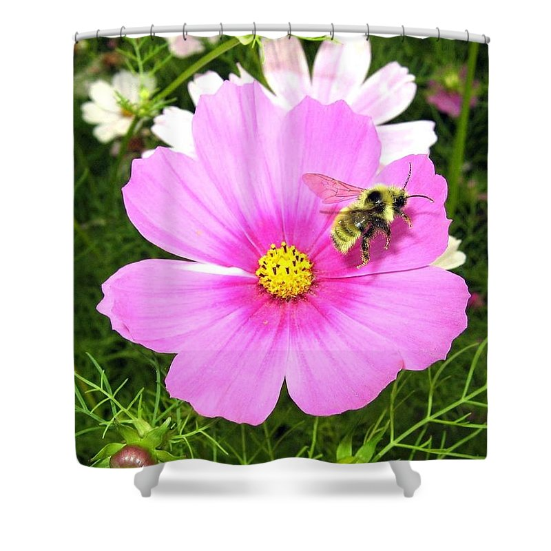 Bee Shower Curtain featuring the photograph Bee-line 6 by Will Borden