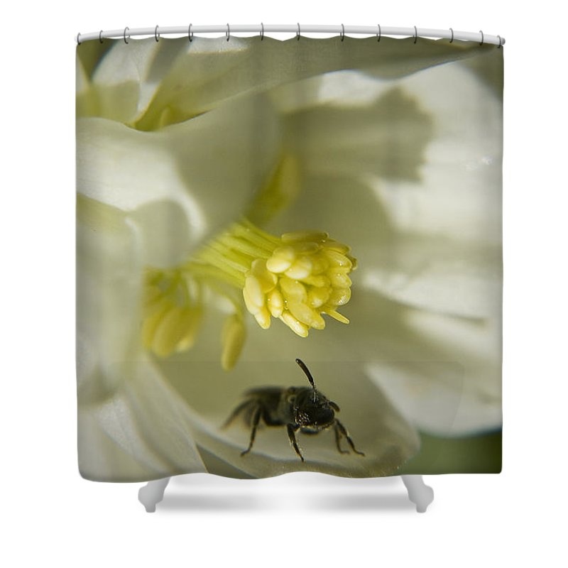 Columbine Shower Curtain featuring the photograph Bee Mine by Teresa Mucha