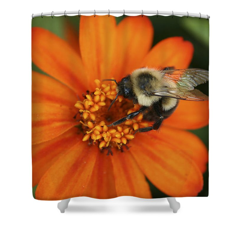Bee Shower Curtain featuring the photograph Bee On Aster by Margie Wildblood