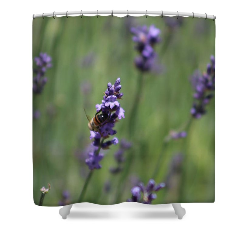 Deep Purple Lavender Shower Curtain featuring the photograph Bee on Deep Purple Lavender Spike by Colleen Cornelius