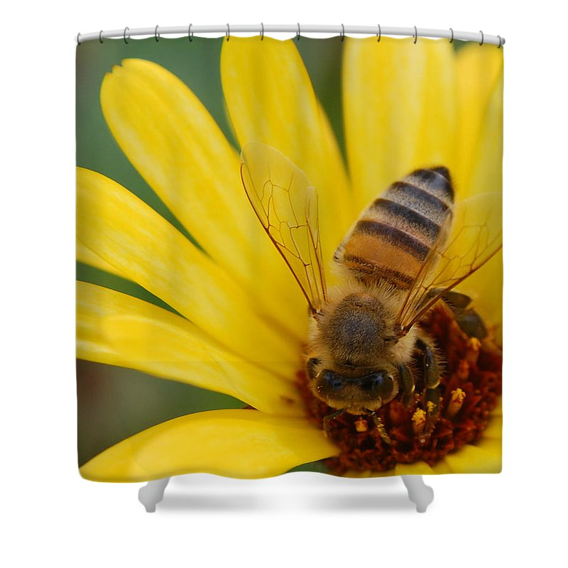 Bee Shower Curtain featuring the photograph Bee On Flower by Amy Fose