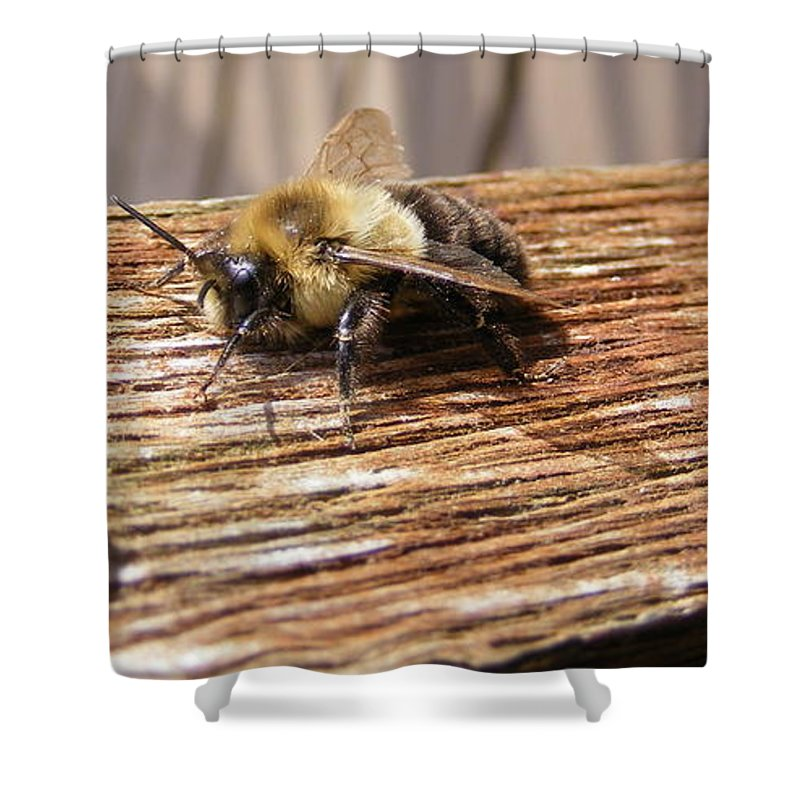 Bee Shower Curtain featuring the photograph Bee-u-tiful by Ed Smith