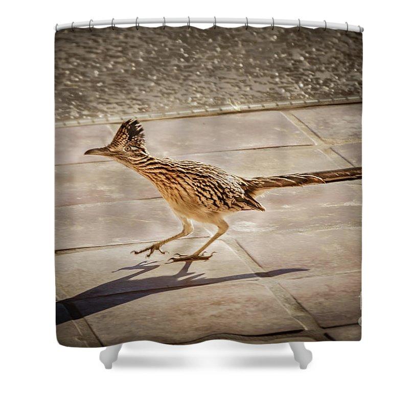Greater Roadrunner Photographs Shower Curtains