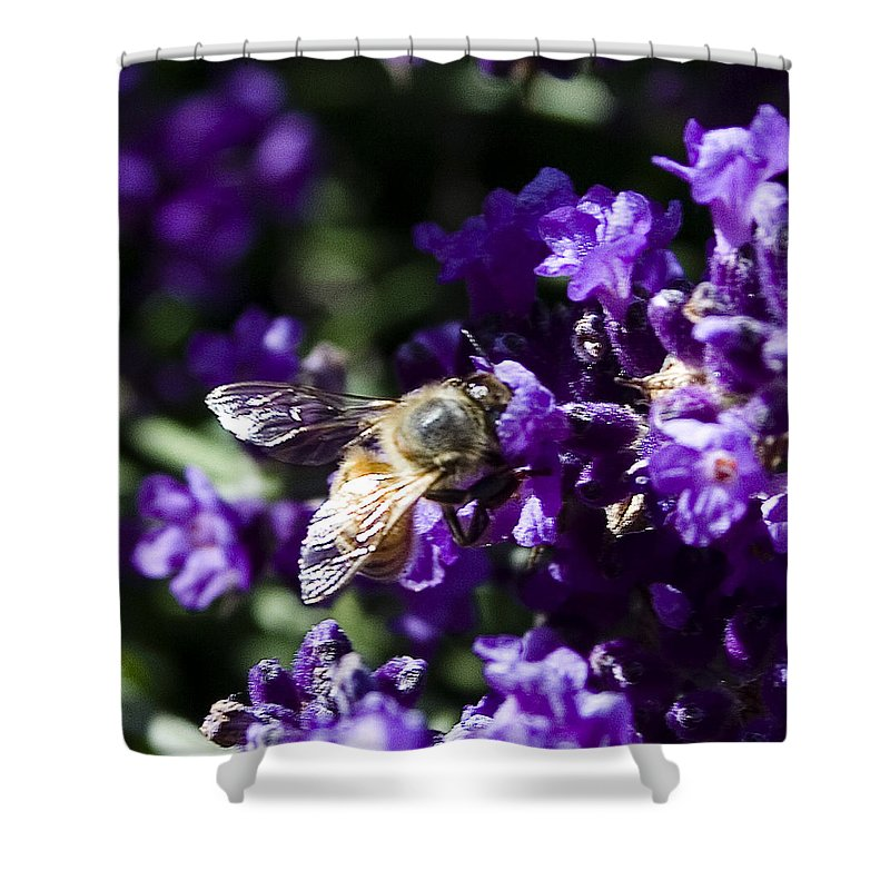 Floral Shower Curtain featuring the photograph Bees Love Purple by David Patterson