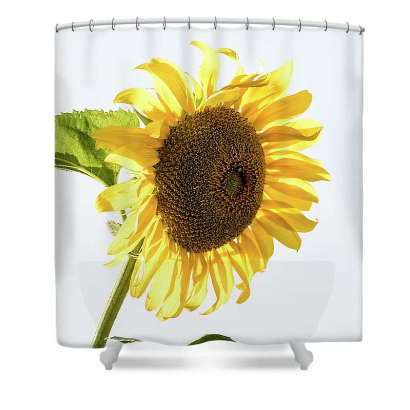 Being Neighborly Shower Curtain featuring the photograph Being Neighborly - by Julie Weber