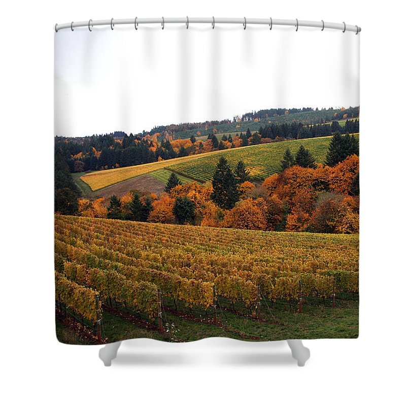 Vineyard Shower Curtain featuring the photograph Bella Vida Vineyard 2 by Sherrie Triest
