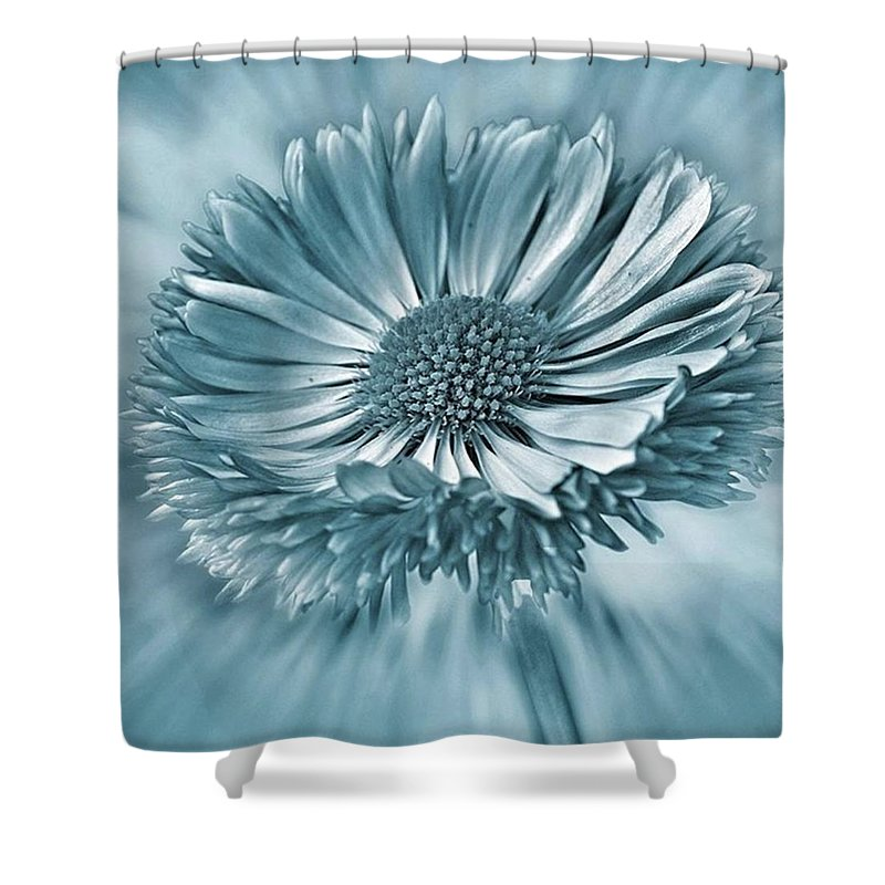 Beautiful Shower Curtain featuring the photograph Bellis In Cyan  #flower #flowers by John Edwards