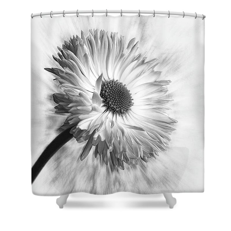 Beautiful Shower Curtain featuring the photograph Bellis In Mono  #flower #flowers by John Edwards