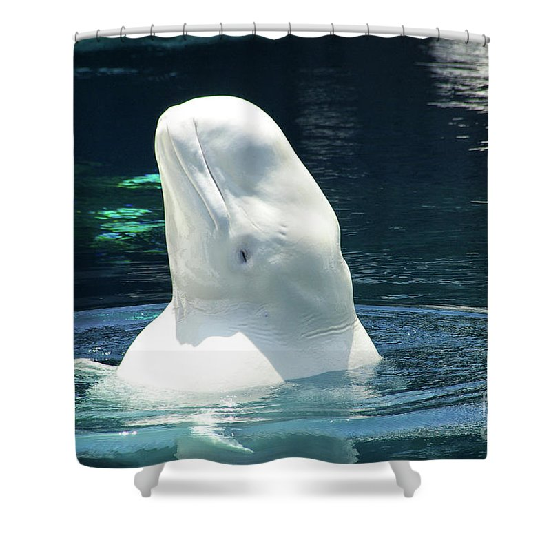 Beluga Shower Curtain featuring the photograph Beluga Whale by Mariola Bitner