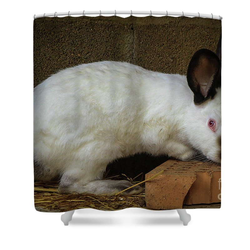 Rabbit Shower Curtain featuring the photograph Benny Bunny by Gisell Iriarte Cortes