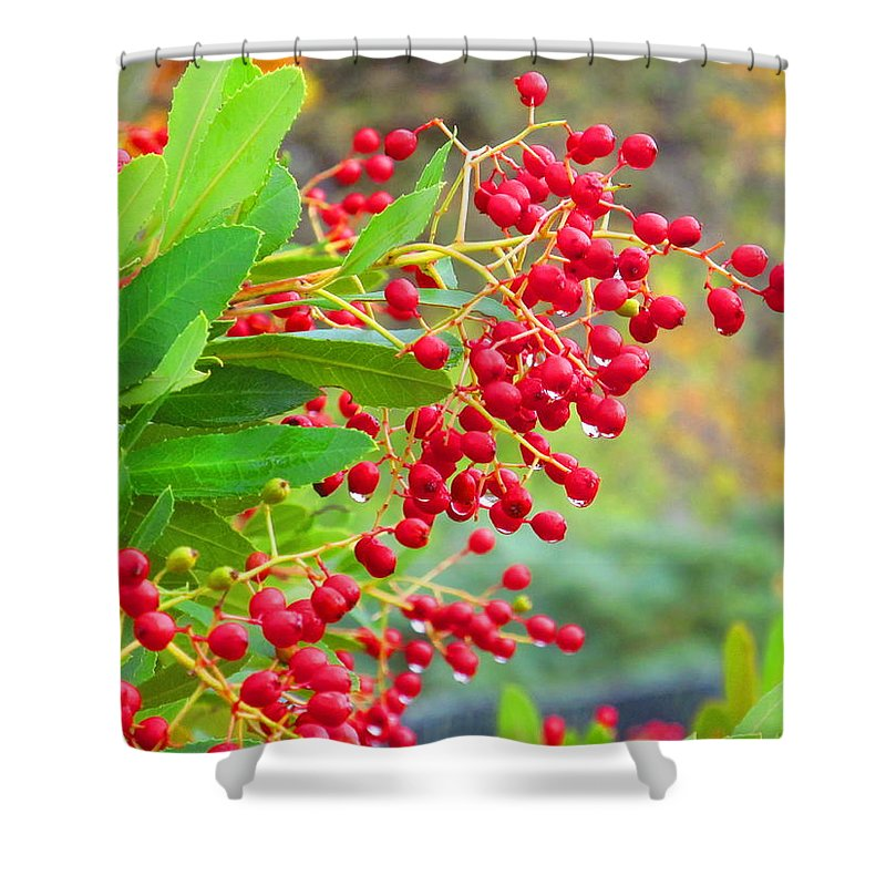 Macro Shower Curtain featuring the photograph Berries Macro by Amie Ebert