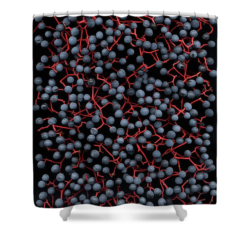 Berries Shower Curtain featuring the photograph Berries by Stefania Levi