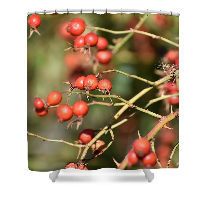Berries Shower Curtain featuring the photograph Berry Christmas by Sharon Horning