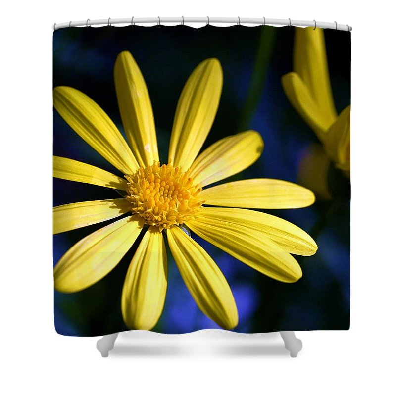Flower Shower Curtain featuring the photograph Best Day by Mitch Cat