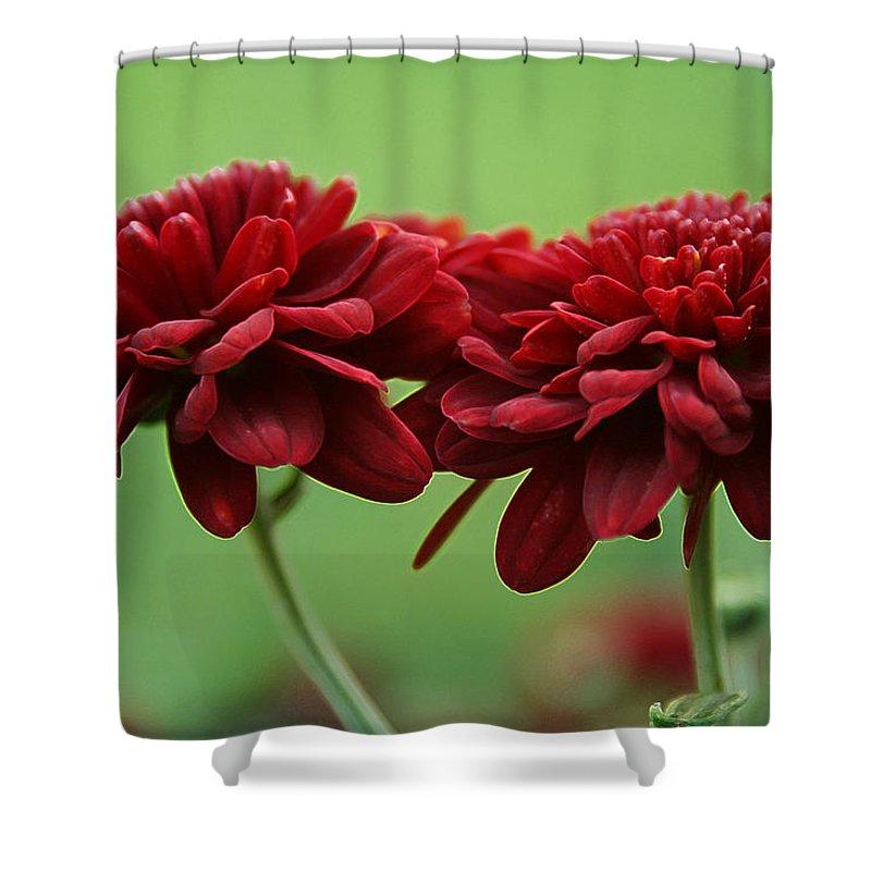 Best Friends Shower Curtain featuring the photograph Best Friends by Linda Sannuti