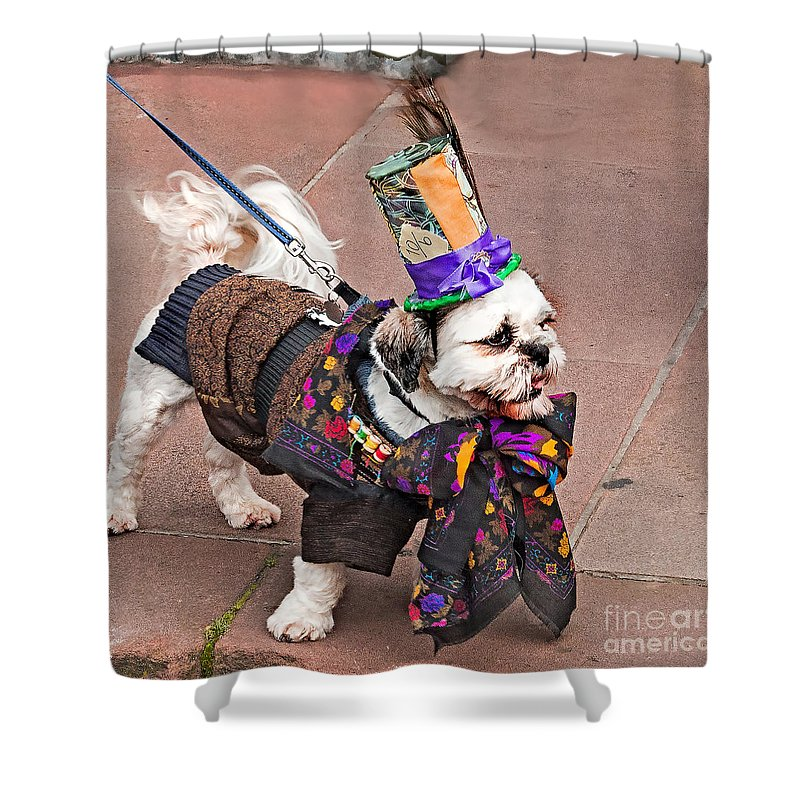 Dog Shower Curtain featuring the photograph Best In Show by Nick Eagles
