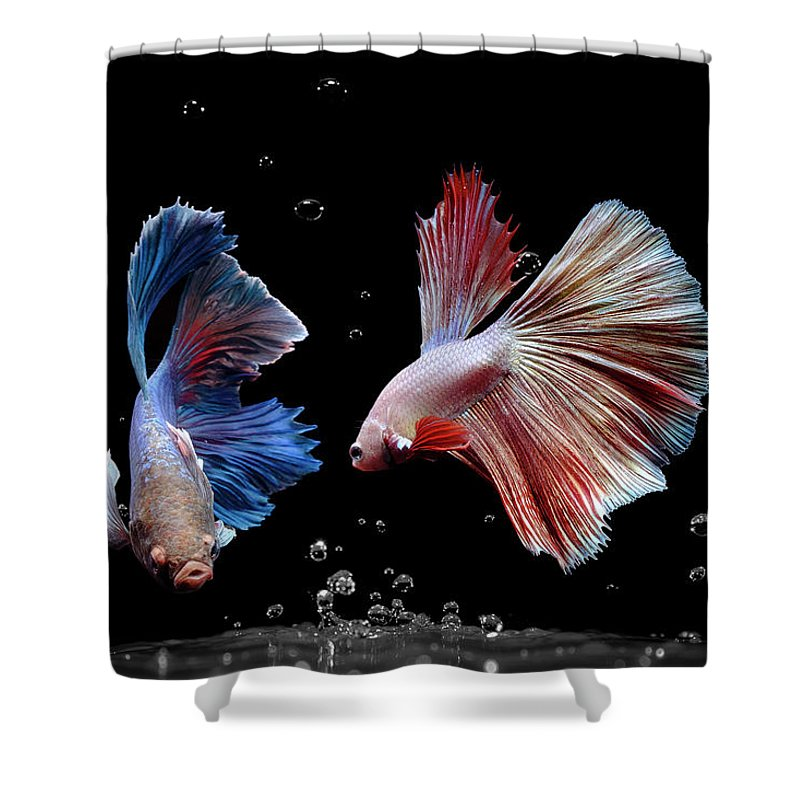 Animal Shower Curtain featuring the photograph Betta1265 by Bang Yos