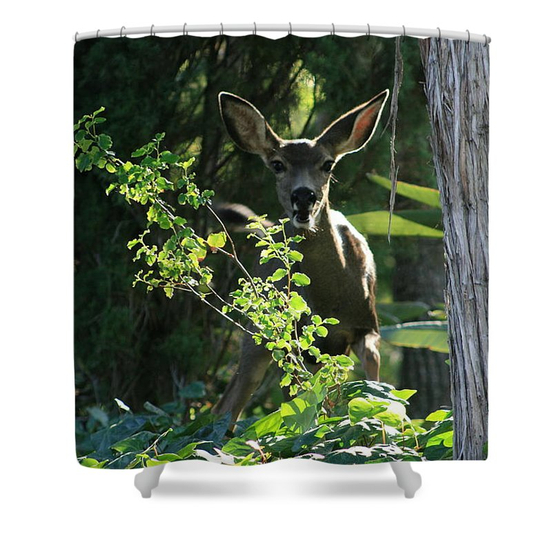 Beverly Hills Shower Curtain featuring the photograph Beverly Hills Deer by Marna Edwards Flavell
