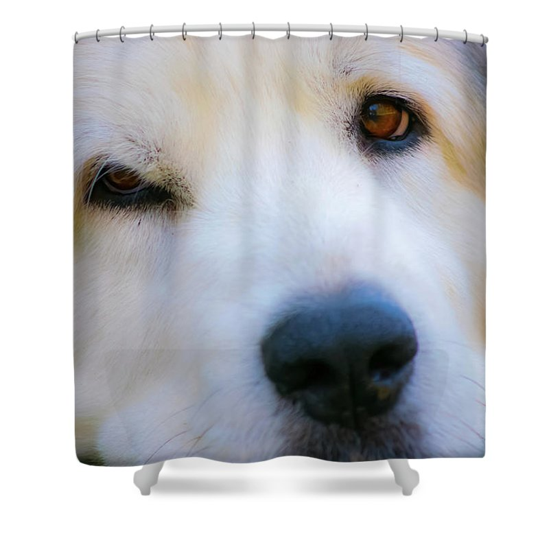 Great Pyrenees Shower Curtain featuring the photograph Big Al by JoAnn McDonald