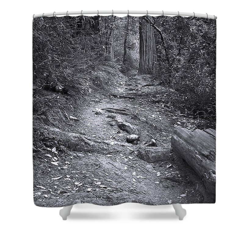 Landscape Shower Curtain featuring the photograph Big Basin Redwoods Sp 1 by Karen W Meyer