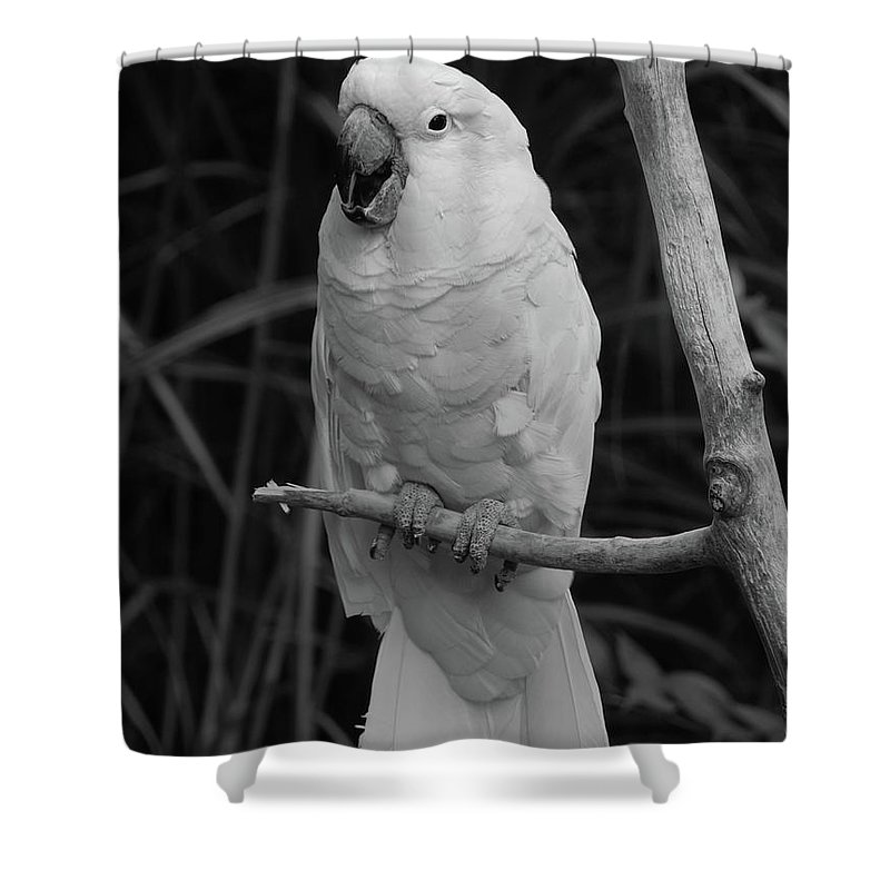 Bird Shower Curtain featuring the photograph Big Bird by Richard Bryce and Family