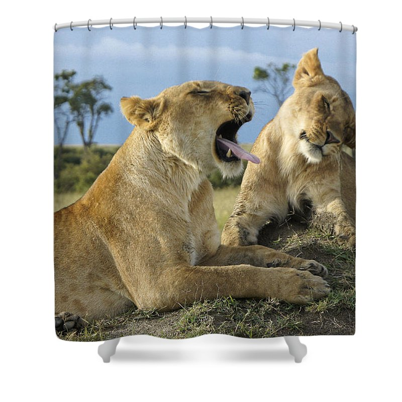 Africa Shower Curtain featuring the photograph Big Blast by Michele Burgess