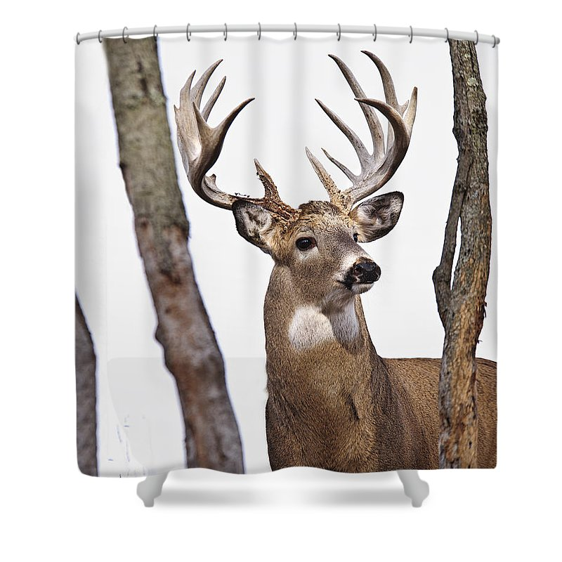 Tim Flanigan Shower Curtain Featuring The Photograph Big Buck By Timothy