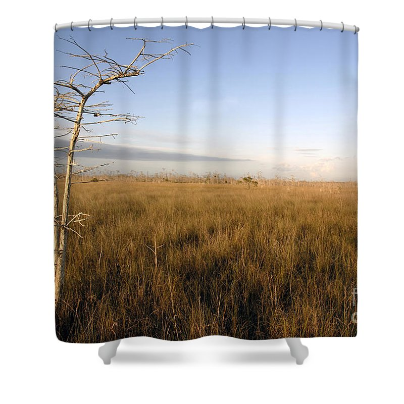 Bald Cypress Shower Curtain featuring the photograph Big Cypress by David Lee Thompson