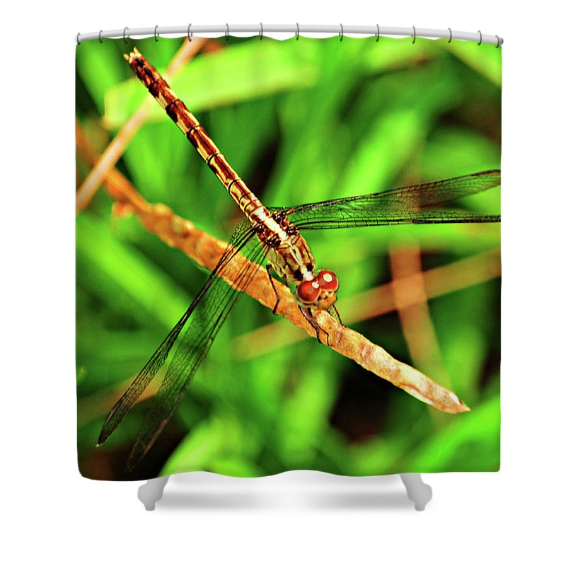 Dragonfly Shower Curtain featuring the photograph Big Eyed Dragonfly by Randy Aveille