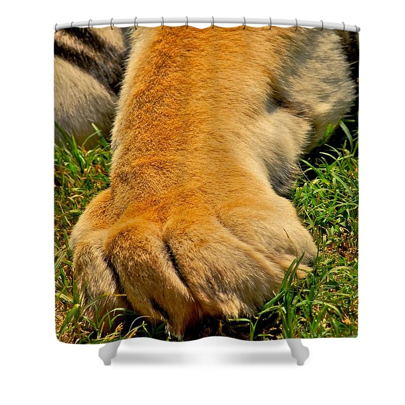 Tigers Shower Curtain featuring the photograph Big Foot by Donna Shahan