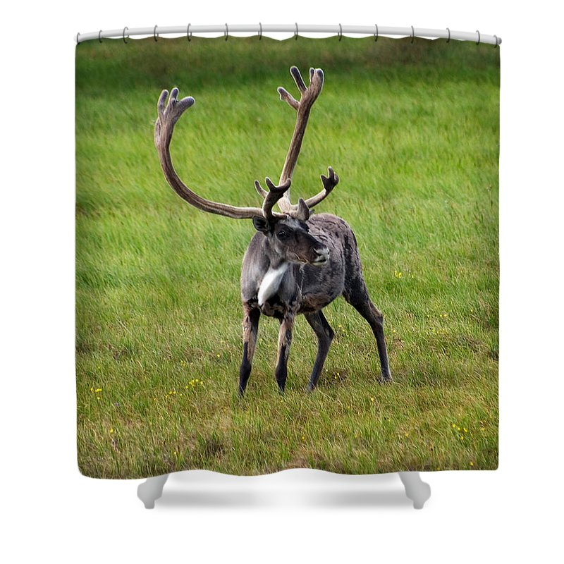 Caribou Shower Curtain featuring the photograph Big Horn by Anthony Jones
