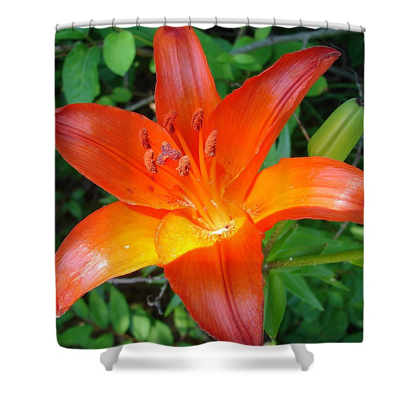 Orange Flower Yellow Shower Curtain featuring the photograph Big Orange by Luciana Seymour