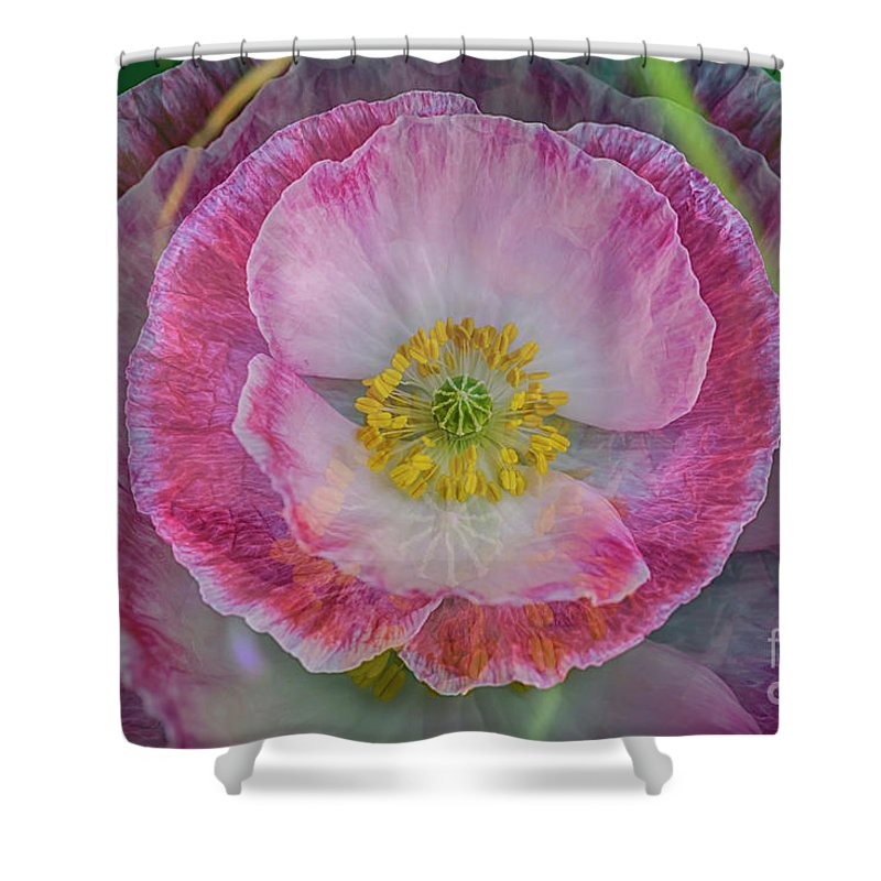 Abstract Shower Curtain featuring the photograph Big Poppy 4 by Veikko Suikkanen