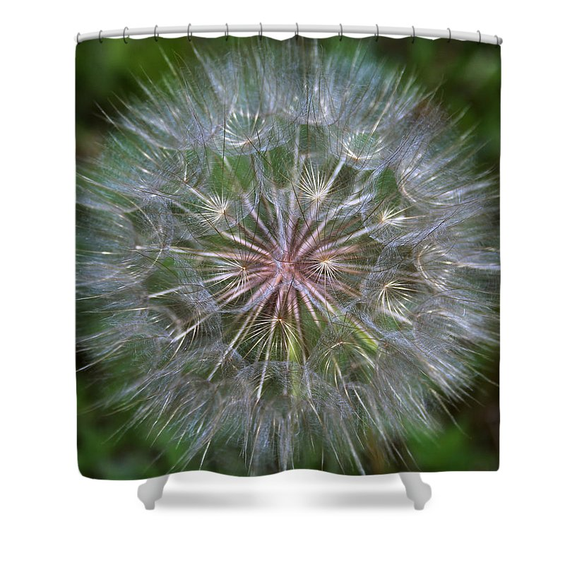 Dandelion Shower Curtain featuring the photograph Big Wish by Linda Sannuti