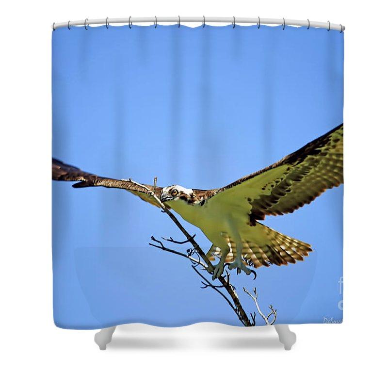 Osprey Shower Curtain featuring the photograph Bigger Then Me by Deborah Benoit
